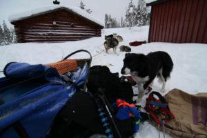 Jowix Flippa, min kennel och guide assistent.