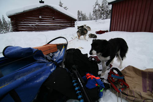 Jowix Flippa, min kennel och guide assistent.