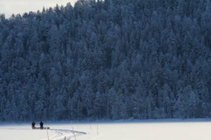 Hundspann på Sårvatj, Svenska Lappland.