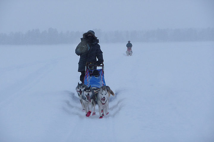 Heike's dog team over the big lake Purkijaur.
