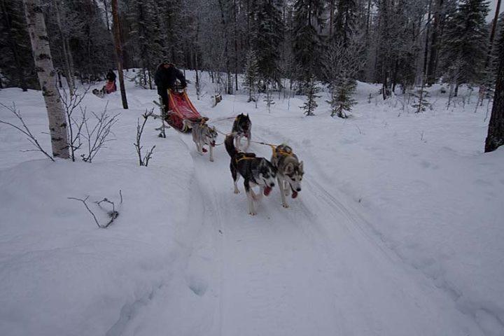 Lapland trails! Sometimes technical trails.