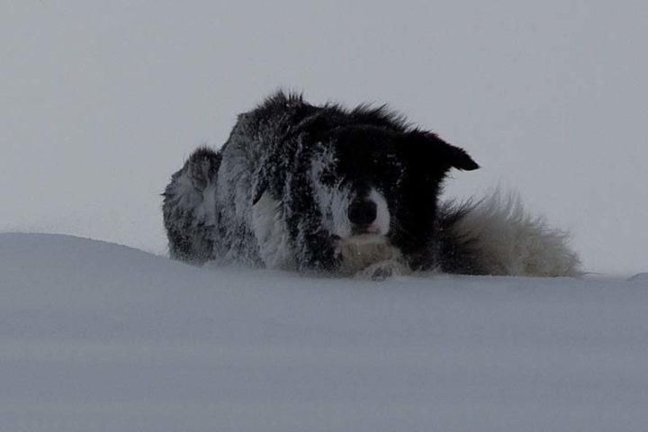 Jowix Flippa waiting in drifting snow for start commando.