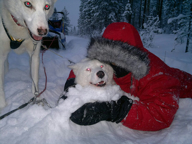 Lucas and husky Viktor became good friends. Both crazy in snow.