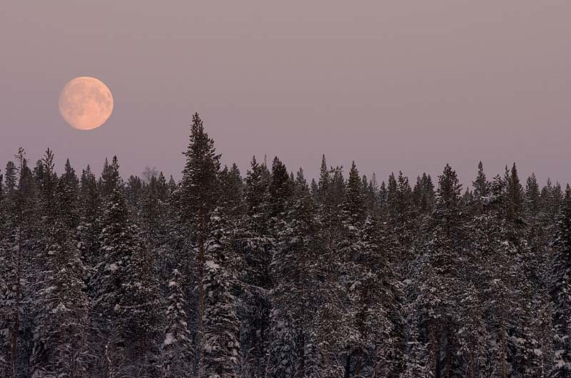 Full moon over the taiga of Swedish Lapland.