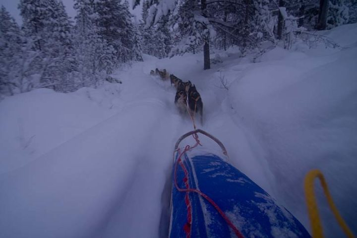 Dogsledding along heavy trails with lots of snow.