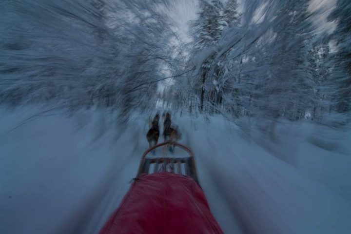 Full speed with dog sleds through the snow covered forest.