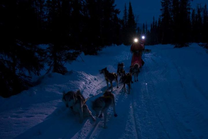 Evening tour with headlights. It's no problem to go dog sledding after dusk.