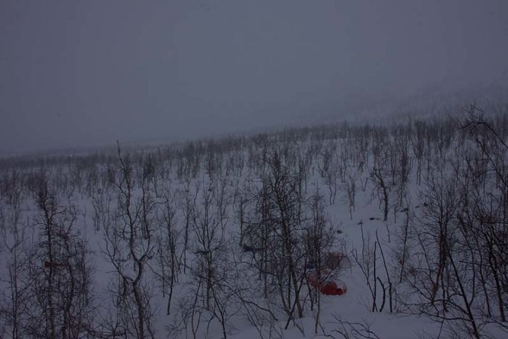 Winter camping with our dog teams in the lower parts of Rapavalley, Sarek.