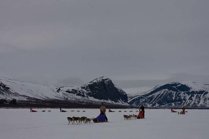 All the dog sled teams coming in for parking by the Sitojaure cabin.
