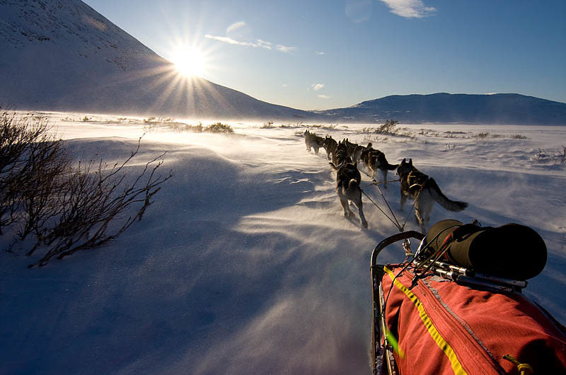 Dog Sledding in Sarek National Park
