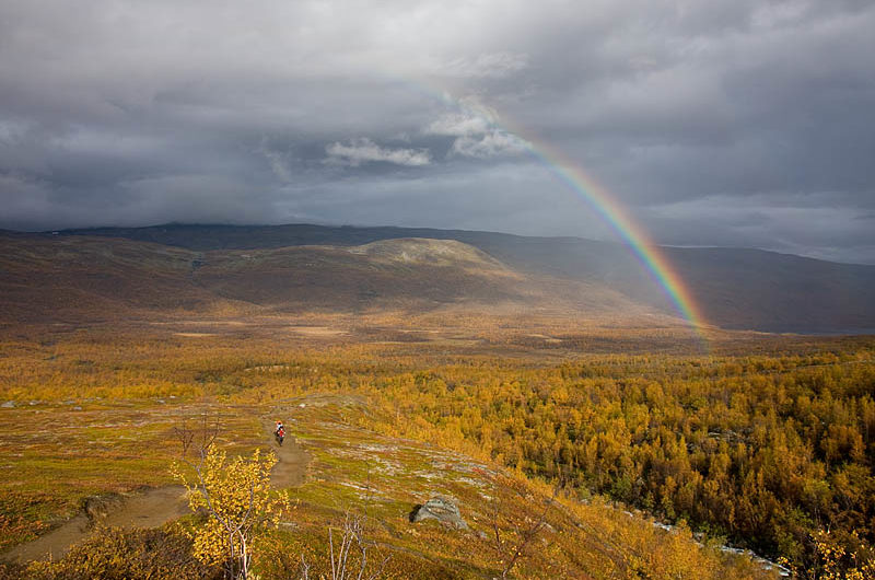 Rainbow over the colored birch forrest. South from Abiskojaure.