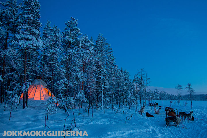 Short tours with dog sled Tipi tent midwinter in Swedish Lapland