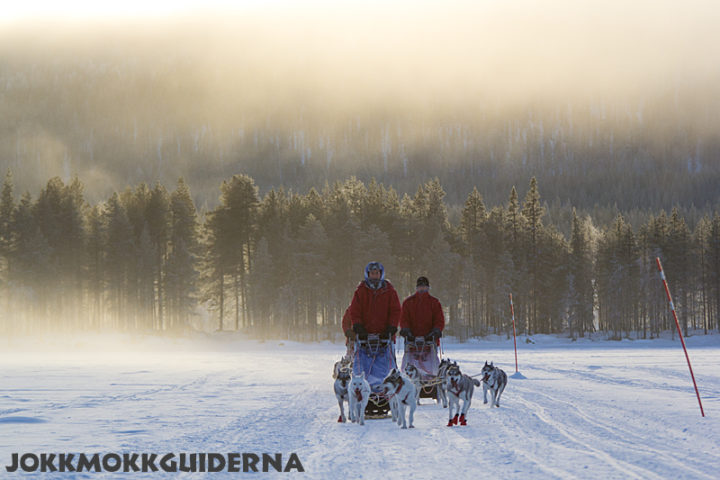 Winter dogsledding adventure in Jokkmokk
