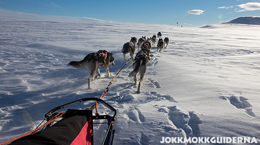 Dog team heading up on the bare mountain.