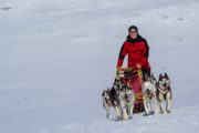 Sled dog team in April on the tour: Sled dog adventure through Sjaunja and Kebnekaise