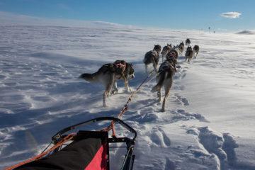 Hundspann korsar över kalfjället på turen: Med hundspann genom Sjaunja och Kebnekaise.