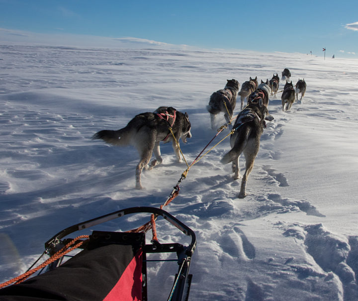 Dog team cross over the mountain on the tour: Sled dog adventure through Sjaunja and Kebnekaise.