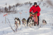 true happines to drive dog sled in the mountains. With dog sled to the Gate of Sarek National Park
