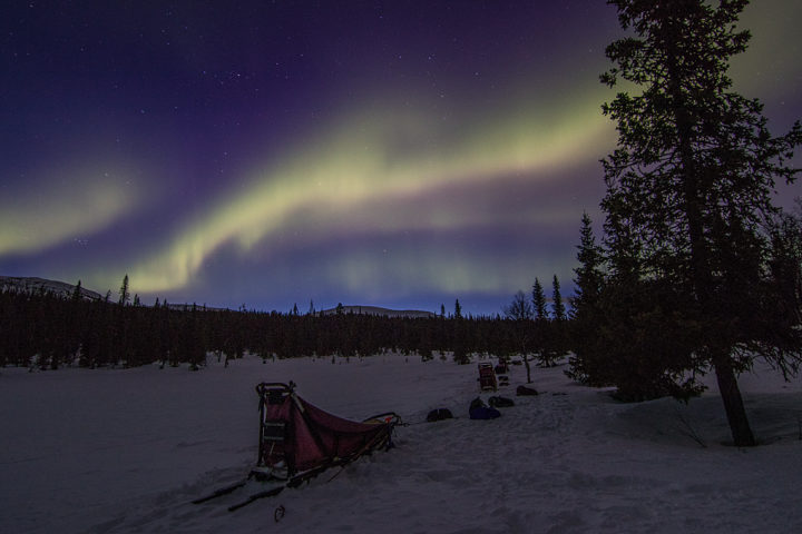 Dog sleds and northern lights in the Swedish mountains in April on the dog sled trip to the Gate of Sarek National Park.