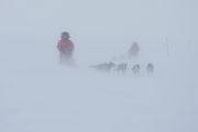 Hundspann i snöstorm, foto från hundspannsturen Med hundspann till porten av Sarek Nationalpark.