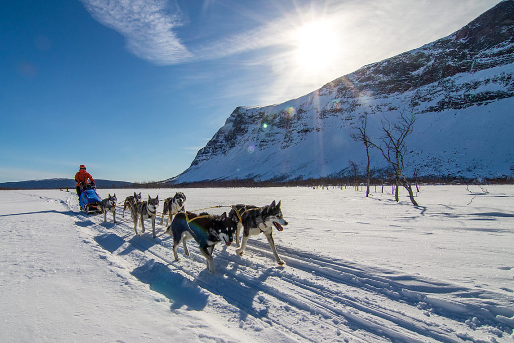 Hundspann på väg in mot Sarek. Bild tagen på hundspannsexpeditionen Explore Sarek Nationalpark.