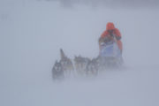 Dog sledding in snow drift and hard wind. Photo from the tour Explore Sarek National Park.