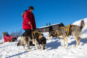 Harnessing sled dogs on a husky trip in Swedish Lapland.