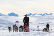 Dog sled teams in Swedish Lapland. Husky trip along the northern King's Trail.