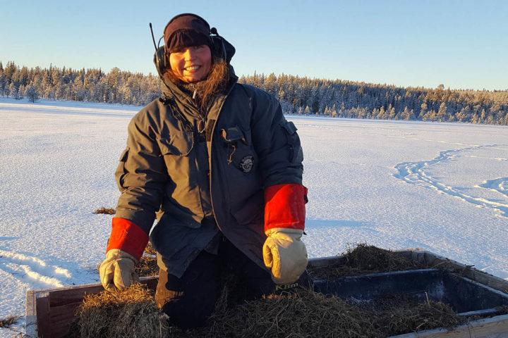 Sami reindeer herder in Jokkmokk, Lapland. Experience Real Life reindeer herding.