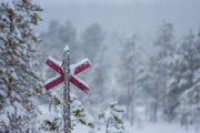 Red cross, a marker for winter trail in Lapland. Here on a dog sledding tour called Crossing Lapland.