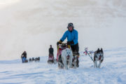 Bare mountains and sled dogs along the Kings Trail. Dog sledding tour.