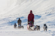 Dog teams on bare mountain in Lapland. Dog sledding tour an adventure.