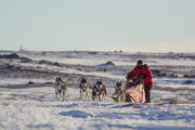 A dog sledding adventure across Lapland. Dogteam of 5 dogs.