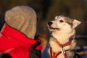Husky och människa i förtroget samtal. Med hundspann i skogslandet.