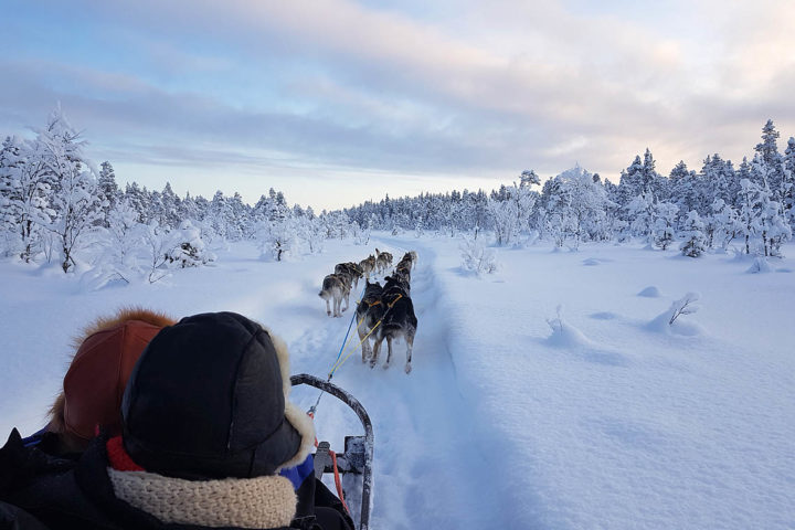Dog sled tour with Jokkmokkguiderna. Photo from the tour With dog sled in the woodlands