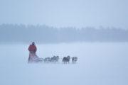 Hundspann en blåsig dag i skogland i Jokkmokk. Hundspannsäventyr och norrskensnätter