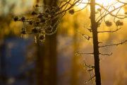 Vårens första solstrålar bryter igenom trädens grenar. Bild från: Hundspannsäventyr och norrskensnätter