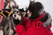 Samspel människa och hund. Draghund slädhund husky Lappland Jokkmokk. Bild från turen Hundspannsäventyr och norrskensnätter