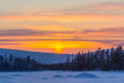 Glowing sky midwinter Lapland Sweden. Dog sledding adventure and Northern lights.