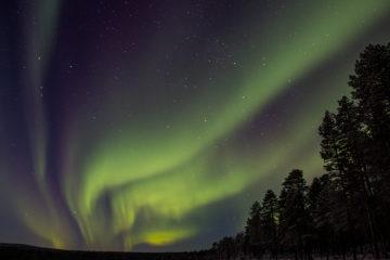 vackert norrsken i lappland. Fotograferat på Hundspannsäventyr och norrskensnätter.