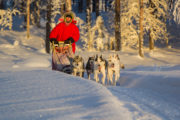 Dog team in the woodlands of Jokkmokk Sweden. Picture from the tour Dog sledding Adventure and Northern lights.