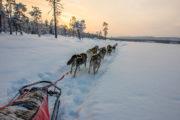 Slädhundar och släde vintertid i Lappland Jokkmokk. Foto från turen Hundspannsäventyr och norrskensnätter