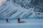 2 dog teams, dog sled adventure A Taste of Sarek National Park.
