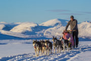 Dog sledding in the mountains Sweden. Picture from the tour A Taste of Sarek National Park