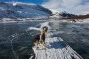 Dog team on windswept icy lake in Sarek. Picture from the dog sled tour A Taste of Sarek National Park