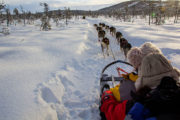 Husky tour in Jokkmokk Swedish Lapland