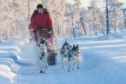 Dog team on a sled dog tour in Jokkmokk. Day tour with dog sled.