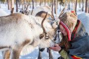 Meet with Anna Kuhmunen and her reindeers at Jokkmokk Market. The Gems of Jokkmokk Winter Market.