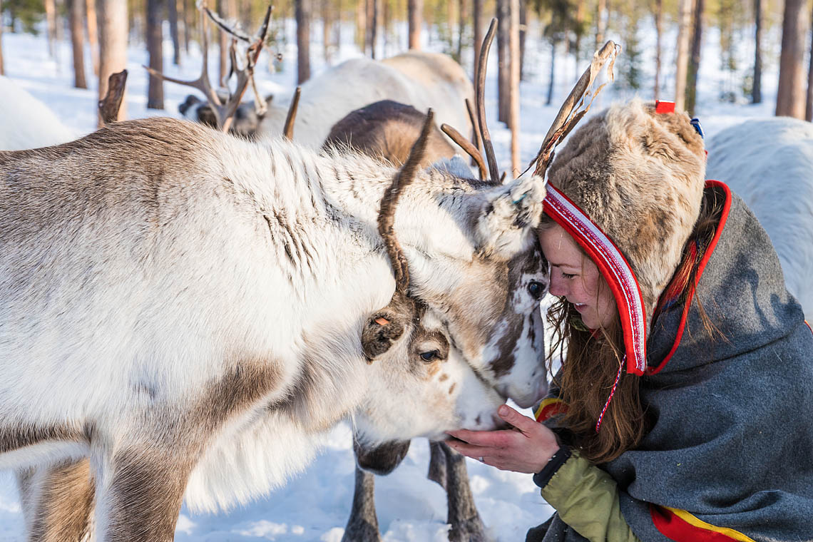 Meet with Anna Kuhmunen and her reindeers at Jokkmokk Market. The Gems of Jokkmokk Winter Market.