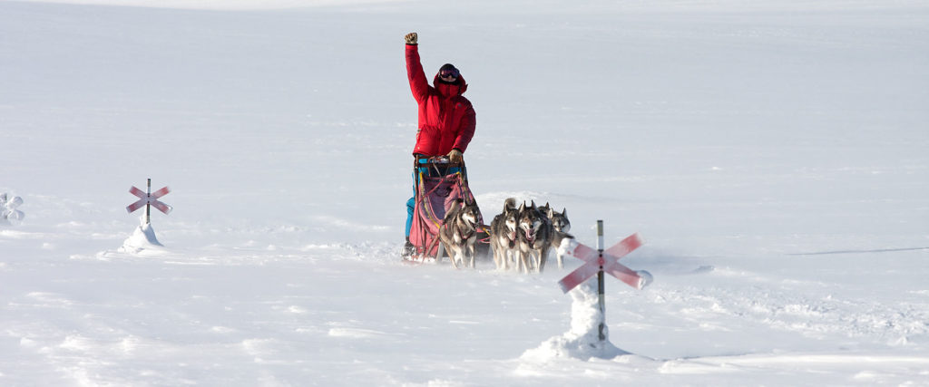 Long dog sledding adventures and expeditions.